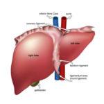 Cách chữa bệnh nóng gan hiệu quả